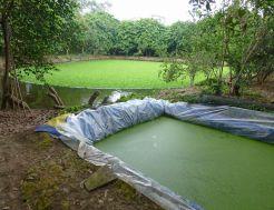 Aquaculture_262