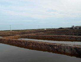 Aquaculture_948