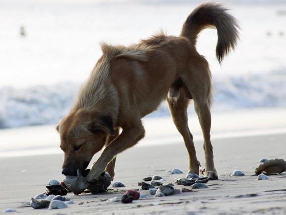 Dog Eating Plastic Wrapper