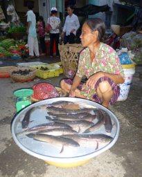 FishVendorCanThoMarket_960