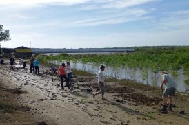 GroupPlantingMangroves_909