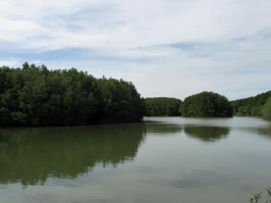 Mangroves_0432