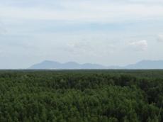 Mangroves&Hills_363