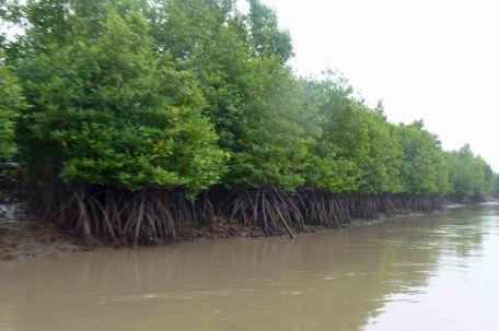 MangrovesLowTide_605