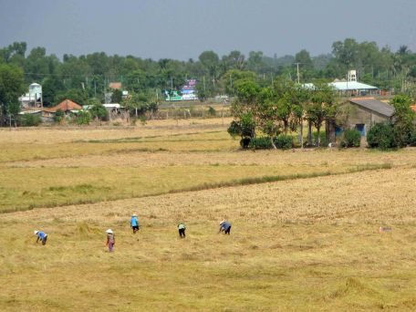 RicePaddyWorkers_113
