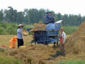 RiceThreshing_439