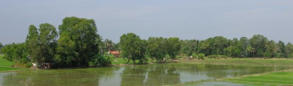 WaterRiceField_130