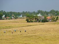WorkersRiceField&Village_113
