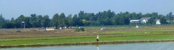 RicePaddy&Farmer_162