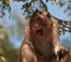 MonkeyCanGio