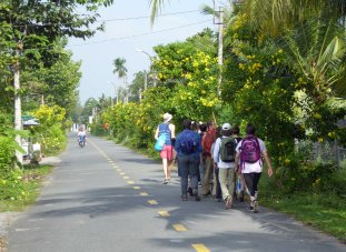 Group Walking on Road 223